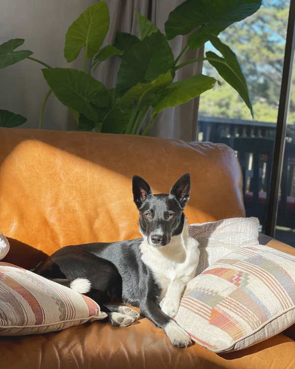 The elegant Banjo, who belongs to loyal reader Crystal, enjoys warm afternoon light. Want your pet to appear in The Highlighter? hltr.co/pets