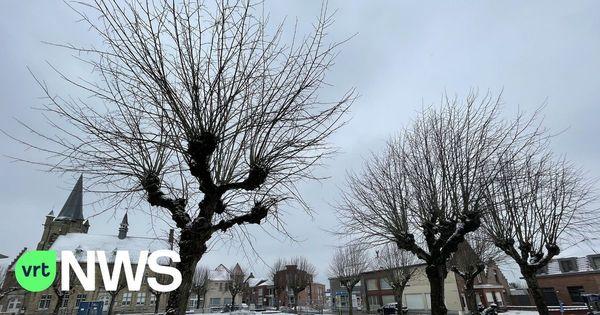 Wijtschate a conclu un compromis concernant les arbres sur la place du village - Wijtschate sluit compromis over bomen op het dorpsplein