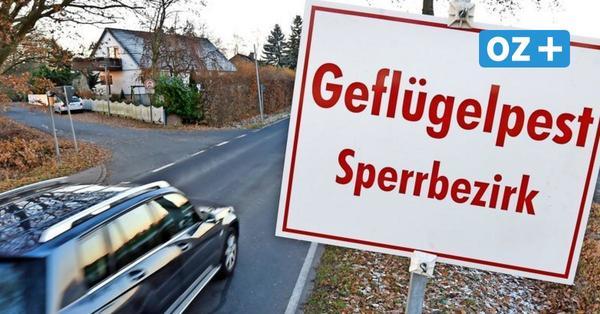 Neuer Ausbruch der Geflügelpest: Stallpflicht in ganz Vorpommern-Rügen