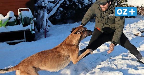 Tipp aus Grimmen: Ein Schnee-Tobe-Stunde mit Vierbeiner bringt Spaß und Sport