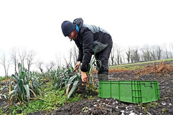 Interessierte zahlen einen monatlichen Beitrag und bekommen einmal pro Woche eine Kiste voller Gemüse. Foto: Enrico Kugler