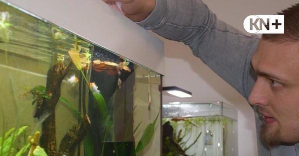 THW-Keeper in Quarantäne - Quenstedts Zeitvertreib: Das Aquarium
