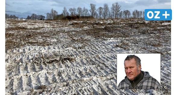 Illegale Rodung? Bäume und Sträucher auf 2000 Quadratmetern nahe Barth abgeholzt