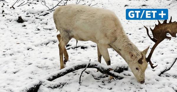 Wintereinbruch in Göttingen: So kann man Wildtieren helfen