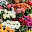 Blumenläden, Gärtnereien, Baumärkte: Das sagt die neue Corona-Verordnung