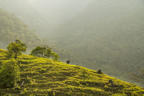 Colombia: leadership in the race against climate change