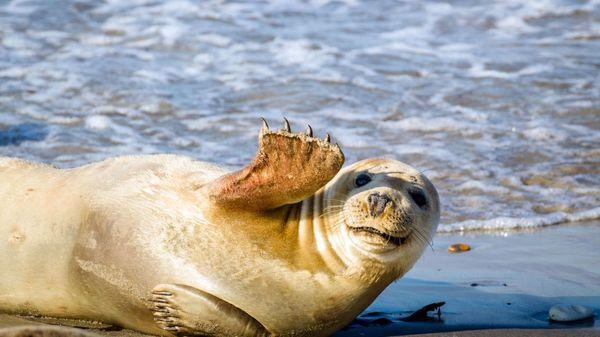 6 animaux surprenants à observer sur le littoral de la mer du Nord - 6 bijzondere dieren die je kan zien aan de kust