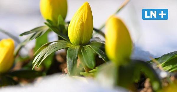 In Schleswig-Holstein zieht der Frühling ein!