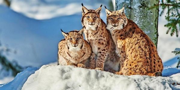 Harz: Wildtiere kommen unterschiedlich gut durch den harten Winter