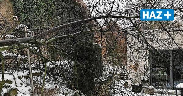 Eisbruch: Hauseigentümer beinahe von Baum erschlagen