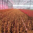 """""""Growers show more interest in LED light"""""""