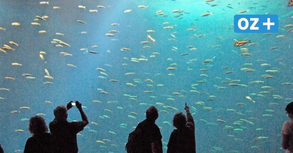 Warum der Hering pupst: Namhafte Künstler gestalten Hörbuch, das Rügens Fischen gewidmet ist