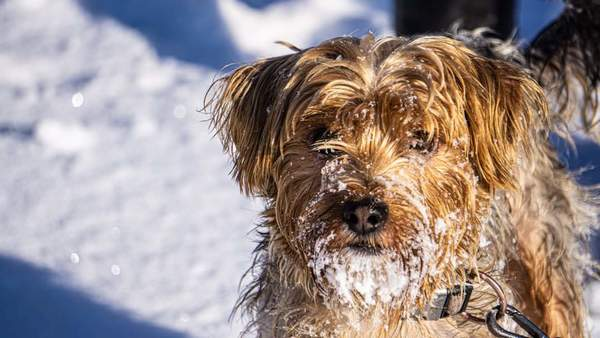 Stephan Bodens Hund Günther im Schnee. (Foto: privat)
