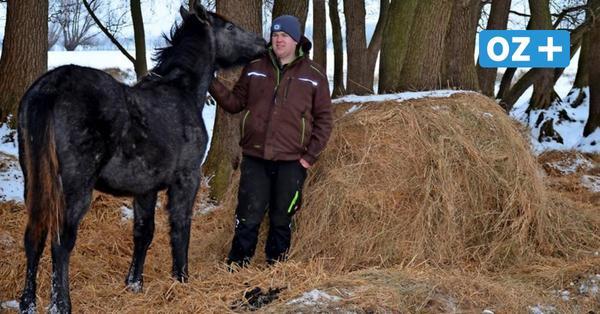 Pferde stehen nachts draußen — Landwirt auf Rügen wehrt sich gegen Tierquäler-Vorwürfe