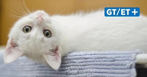 Hamburg: Katzen mit Corona infiziert und in Quarantäne