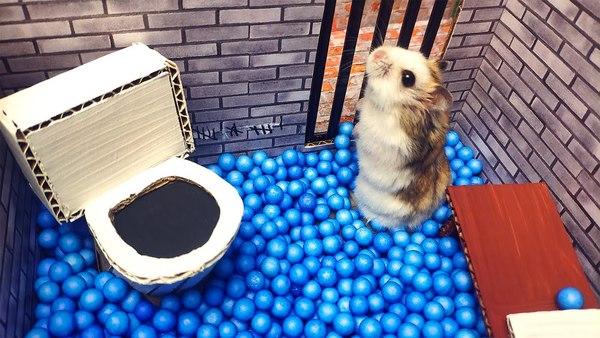 Hamster escape room (CUTENESS OVERLOAD!)