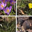 Wie haben Sie das traumhafte Frühlingswochenende im Landkreis Göttingen erlebt?