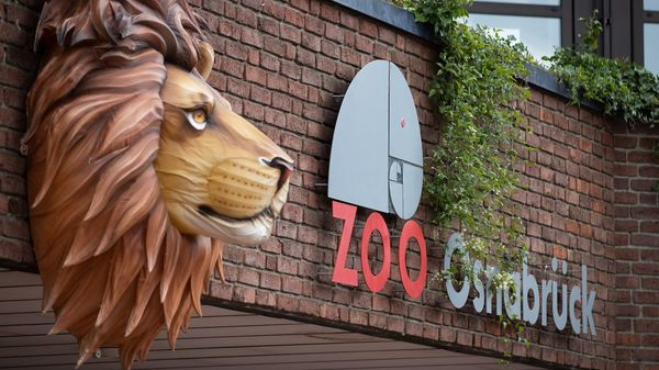 Zoo Osnabrück: Löwe greift 25-jährige Tierpflegerin im Gehege an