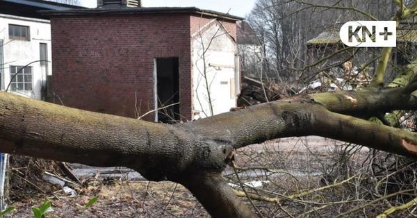 Empörung in Neumünster: 5000 Quadratmeter Wald abgeholzt - ohne Genehmigung