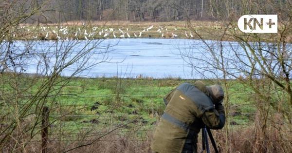 Tierfotografen in Westensee: In bester Tarnung auf Motivjagd