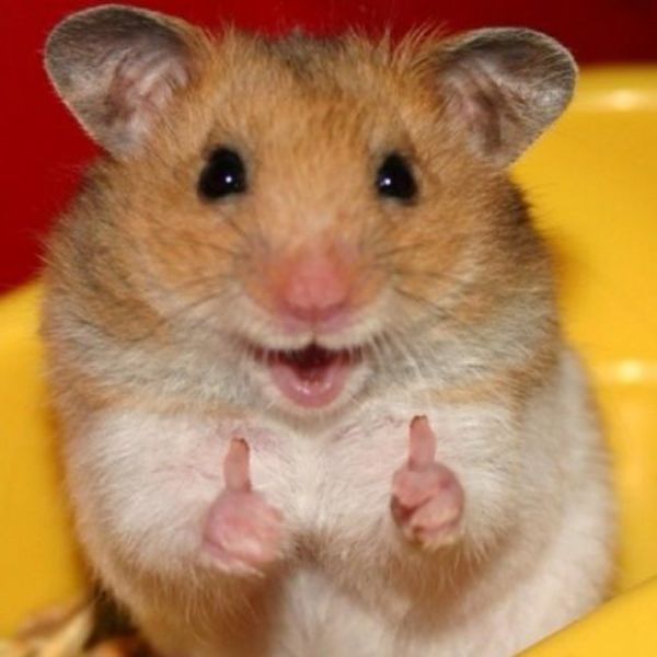 If The Fonz was a hamster...