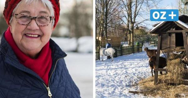 Rostock-Lichtenhagen: Wenn man sich auf Zehenspitzen stellt, kann man fast die Ostsee sehen