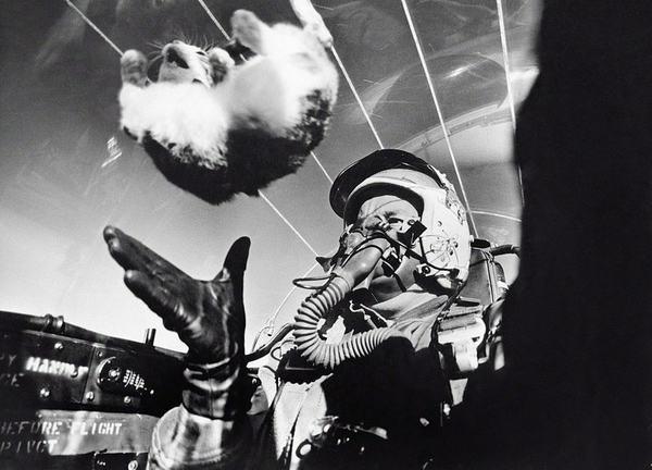 Februar 1958: Die erste Katze in der Schwerelosigkeit (never forget)
