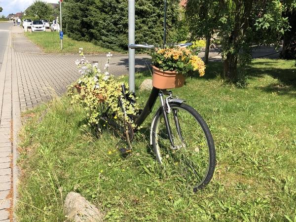 Das Blumenfahrrad steht An den Salzwiesen in Bad Doberan. (Foto: C. Meyer)