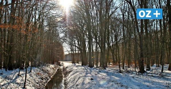 Kurzer Wintereinbruch in NWM: Das bedeutet die extreme Witterung für Forst- und Landwirtschaft