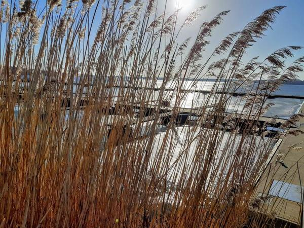 Ein Hauch von Frühling am Plauer See (Foto: Burkhardt Geist)