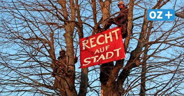 Protest in Greifswald: Aktivistinnen besetzen Baum in Stralsunder Straße