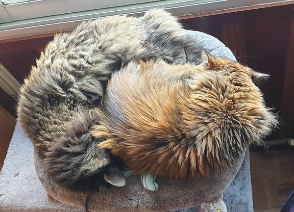 Siempre habrá una foto de al menos una de mis dos gatitas en los newsletter.