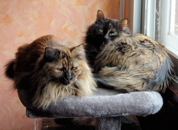 Daenys y Gala compartiendo la cima de rascador a medio despertar.