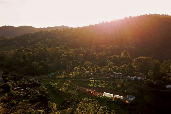 Brazil: agroforestry and land reform give Brazil cacao farmers sweet taste of success