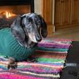 Fanbyte Staff Pet of the Month: Ziggy