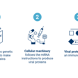 What Are mRNA Therapies, And How Are They Used For Vaccines? - CB Insights Research
