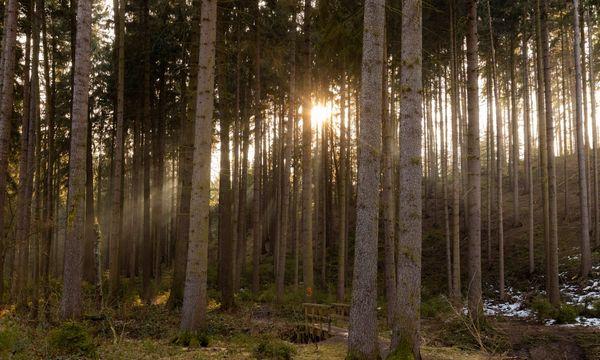 Deutschlands schönste Wanderwege 2021 für eine Tagestour