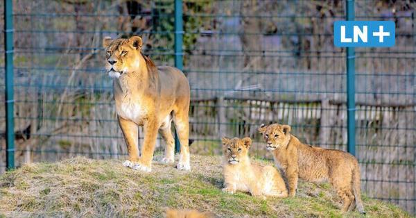 Nach dem Lockdown: Zoo in Grömitz und Vogelpark Niendorf öffnen wieder