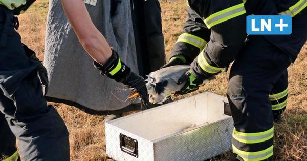 Feuerwehr Escheburg rettet Graureiher