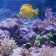 Rostock will Leuchtturm der Unterwasserforschung werden