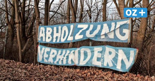 Stralsund: Junge Umweltaktivisten klettern auf Bäume – um Erhalt eines Waldstücks zu fordern