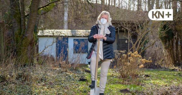 Kleingärten Baumwegkoppel in Kiel: Kontaminierter Boden schockt Pächter