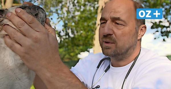 TV-Tierarzt aus Sassnitz erhebt schwere Vorwürfe gegen Tierheim auf Rügen