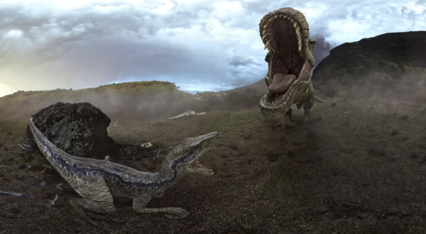 Can you see the T-Rex Saliva in this battle between the Raptor v T-Rex?