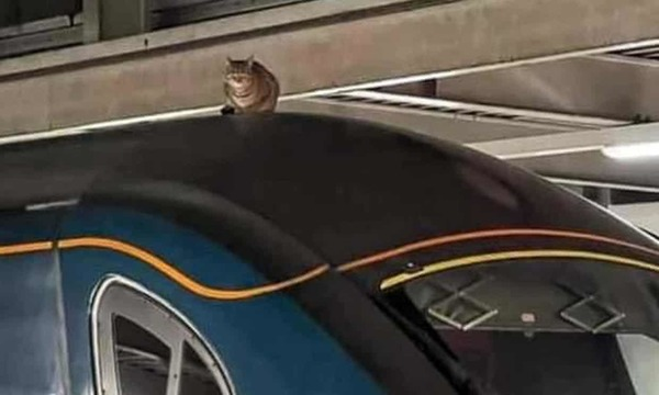 Cat on a fast train roof holds up London to Manchester service