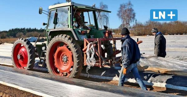 Im Lauenburgischen wird die Spargelsaison vorbereitet