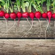 5 Vegan Replacements for Radishes Which, Yes, Are Vegetables, But Always Gave Me a Bad Vibe by Ramsey Daniels [The Daily Drunk]