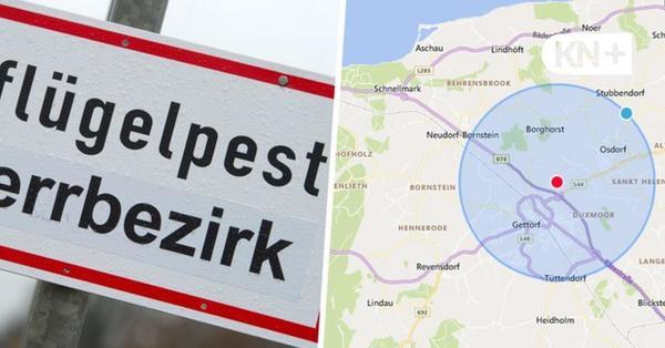 Geflügelpest bei Hobbyhalter in Gettorf - Sperzone drei Kilometer