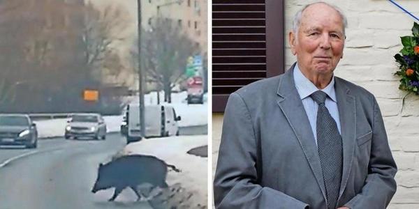 """""""Wegjagen hilft nicht"""": Was dieser Tierarzt gegen die Wildschweinplage in Greifswald tun würde"""