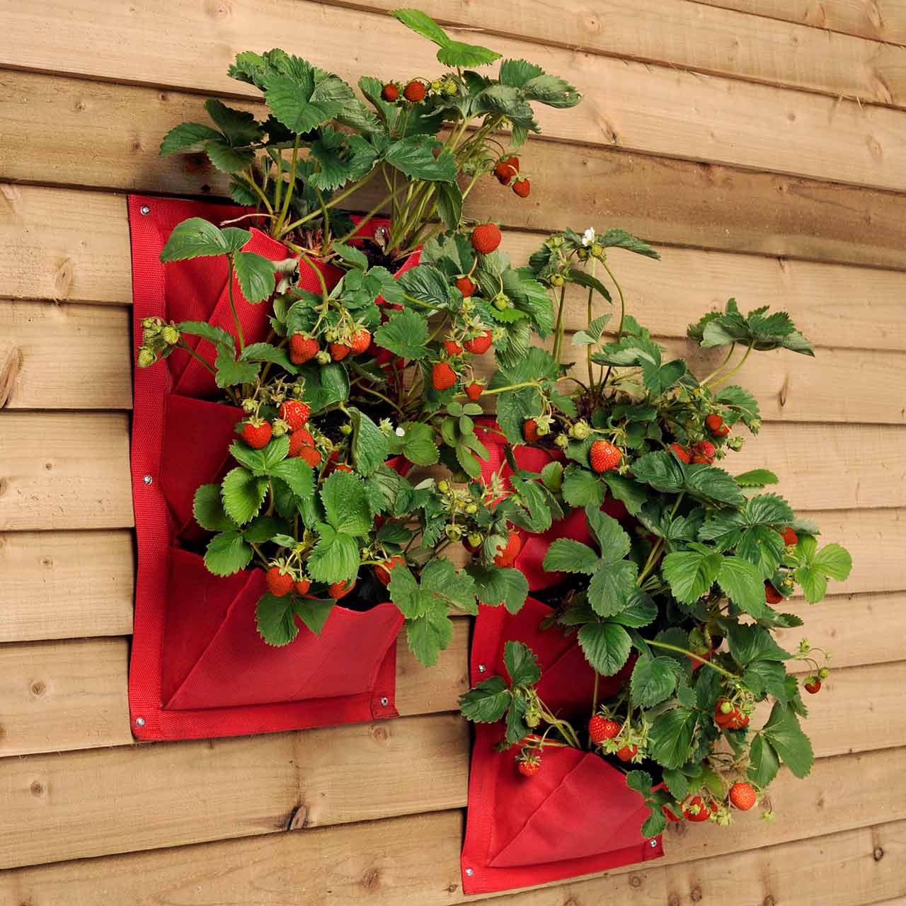 Foto: thegardenshop.com